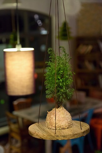 Hanging pine courtesy of Tranquil Plants