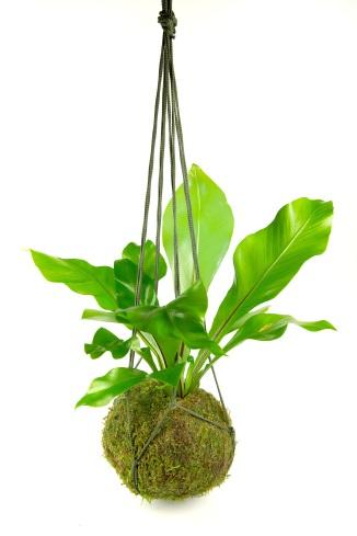 tranquil plants string garden workshop